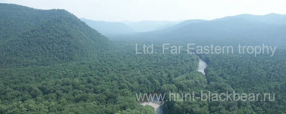 пейзажа леса с рекой